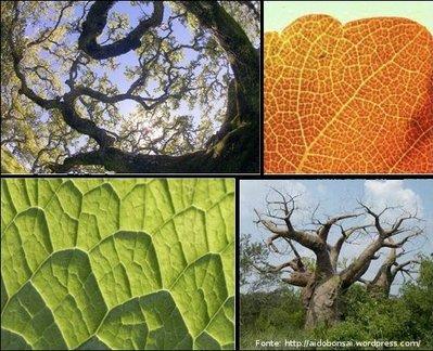 Imagens em que se podem observar características de objetos fractais como a autossimilaridade.