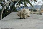 Imagem da concha de um caracol.