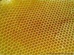 Imagem de um favo de mel em que é possível observar seus casulos hexagonais. Com esta imagem, o Professor pode trabalhar a relação entre elementos da Matemática e a natureza, bem como a possibilidade de se construir mosaicos com hexágonos regulares.