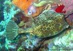 Imagem de peixe com escamas em forma de hexágono. Com esta imagem, o Professor pode trabalhar a relação entre elementos da Matemática e natureza.