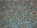 Imagem de uma superfície coberta com módulos que se encaixam. Pode ser usada para trabalhar com conceitos de recobrimento e pavimentação.